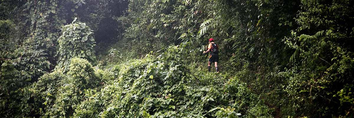 Visuel Ambiance Chiang Mai Jungle