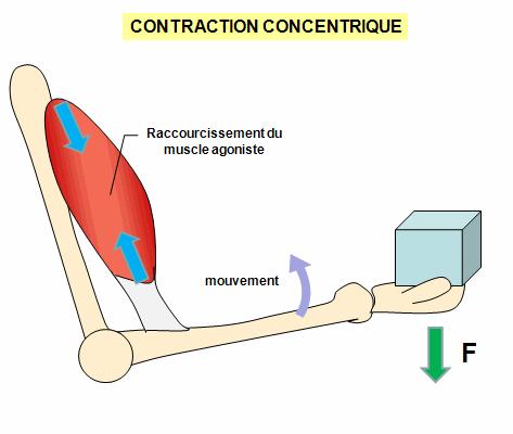 contraction concentrique : préparation physique GR20