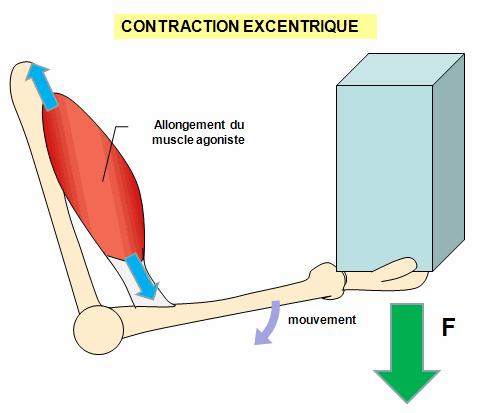 contraction excentrique : préparation physique GR20