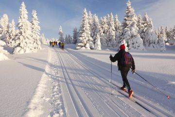 Les meilleurs skis de fond 2021