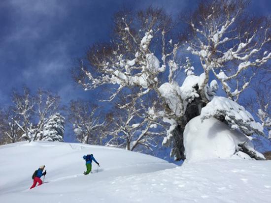 skier-au-Japon