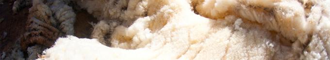 laine swisswool ortovox